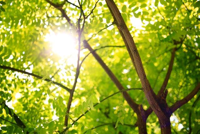 Geur van bomen